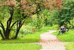 jesień footpath opuszczać czerwoną scenerię Obraz Stock