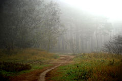 Jesień forrest zdjęcia stock