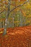 Jesień forrest z złotymi liśćmi powszechnymi Zdjęcia Royalty Free