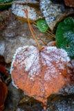 Jesień frosted liść Zdjęcie Royalty Free