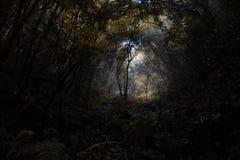 Jesień głębocy gęści lasy z ciemnym środowiskiem obrazy stock
