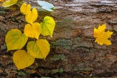 Jesień gałąź Zdjęcie Stock