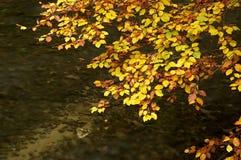 Jesień gałąź woda - woda zdjęcia royalty free