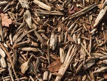 jesień gałązki Zdjęcie Stock