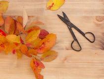 jesień gałęziasty ilustraci liść wektor Obraz Royalty Free