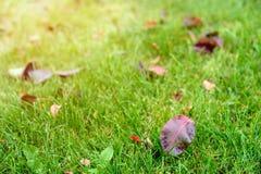 Jesień gazonu tło Obrazy Royalty Free