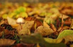 Jesień grzyb zdjęcia stock