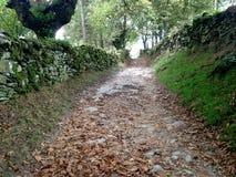Jesień Hiszpania Santiago de camino Antyczne rzymianin ściany kamienie Zdjęcia Royalty Free