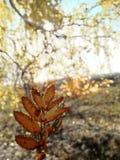 Jesień i liście przeciw ranku słońcu zdjęcia stock