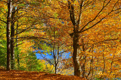 Jesień i natura Fotografia Royalty Free