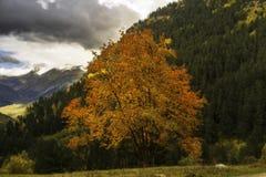 Jesień i zima kontrastujemy w zimnym dniu fotografia royalty free