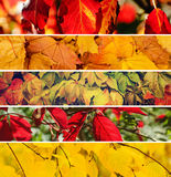 jesień inkasowy kolorowy kabaczka stół Obraz Royalty Free