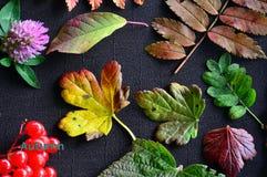 jesień inkasowy kolorowy kabaczka stół Jesień barwiący liście na ciemnym tle Fotografia Royalty Free