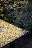 jesień japoński liść dach Zdjęcie Stock