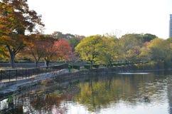 Jesień Japonia kolor czerwona zieleń i kolor żółty Obraz Royalty Free