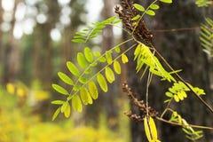 Jesień, jesienny ornament, tekstura lub tło, Zdjęcia Royalty Free