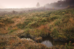 jesień jutrzenkowy mgłowy lasu krajobraz mglisty obrazy stock