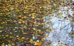 jesień kałuża zdjęcia stock