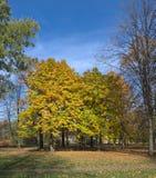 Jesień kasztany Obrazy Royalty Free