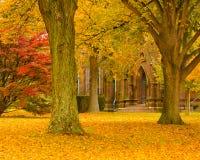 jesień katedra obrazy royalty free