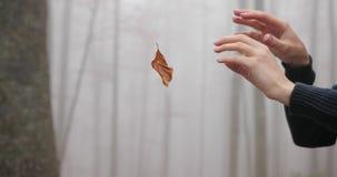 Jesień klimaty Mgłowa lasowa kobieta robi magii z spadać liściem Ręki zakończenie zbiory