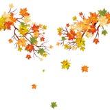 Jesień klon Zdjęcie Royalty Free