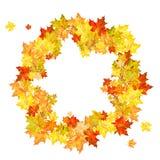 Jesień klon Zdjęcie Stock