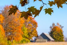 Jesień klon rozgałęzia się i liście, wioska dom n Obraz Stock