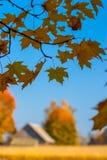 Jesień klon rozgałęzia się i liście, wioska dom n Obrazy Royalty Free