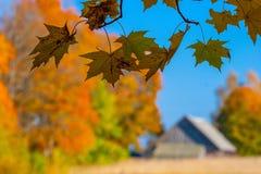 Jesień klon rozgałęzia się i liście, wioska dom n Fotografia Stock
