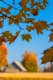 Jesień klon rozgałęzia się i liście, wioska dom n Obraz Royalty Free