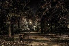 Jesień Klonowa aleja przy nocą Kronstadt Obraz Stock