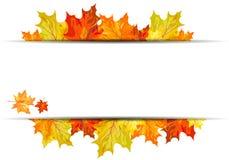 Jesień klonu tło Obrazy Stock