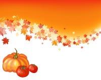 Jesień klonu tło Obrazy Royalty Free