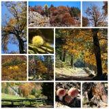 jesień kolaż Fotografia Royalty Free