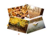 jesień kolażu fotografie zdjęcie stock