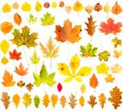 jesień kolekci liść Zdjęcia Royalty Free