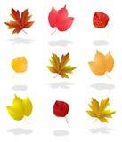 jesień kolekci liść Obrazy Royalty Free