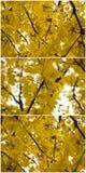Jesień kolorów żółtych liści kolaż Obrazy Stock