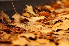 Jesień - kolorów żółtych liście Fotografia Royalty Free