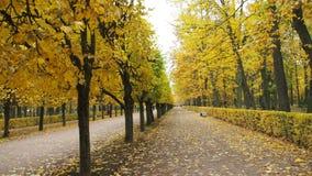 Jesień kolor żółty Opuszcza desktop tło zdjęcia stock