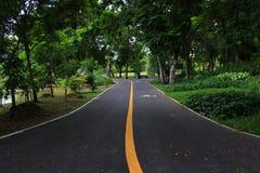 jesień kolor żółty parkowy drogowy Obraz Royalty Free