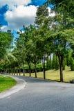 jesień kolor żółty parkowy drogowy Zdjęcie Royalty Free