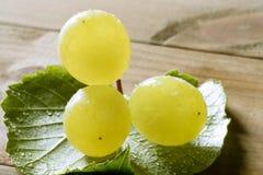 jesień kolor żółty wyśmienicie owocowy gronowy Zdjęcie Stock