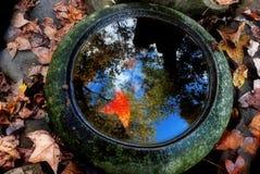 Jesień kolor obrazy royalty free
