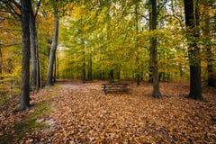 Jesień kolor przy Wye wyspą, Maryland fotografia royalty free