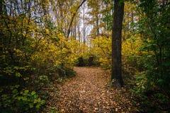 Jesień kolor wzdłuż śladu przy Wye wyspą, Maryland obrazy stock