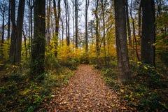 Jesień kolor wzdłuż śladu przy Wye wyspą, Maryland zdjęcia stock