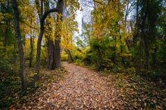 Jesień kolor wzdłuż śladu przy Wye wyspą, Maryland fotografia stock