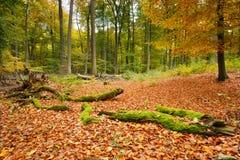 jesień kolorowa Zdjęcie Royalty Free